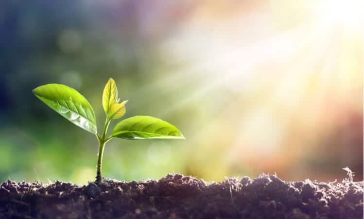 plant sunshine